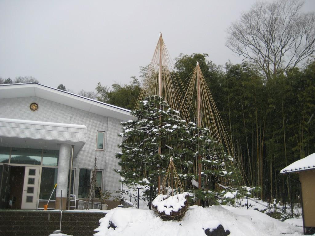 雪吊りが行われた松の大木