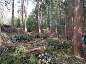 間伐が実施され動物との緩衝地帯を創出