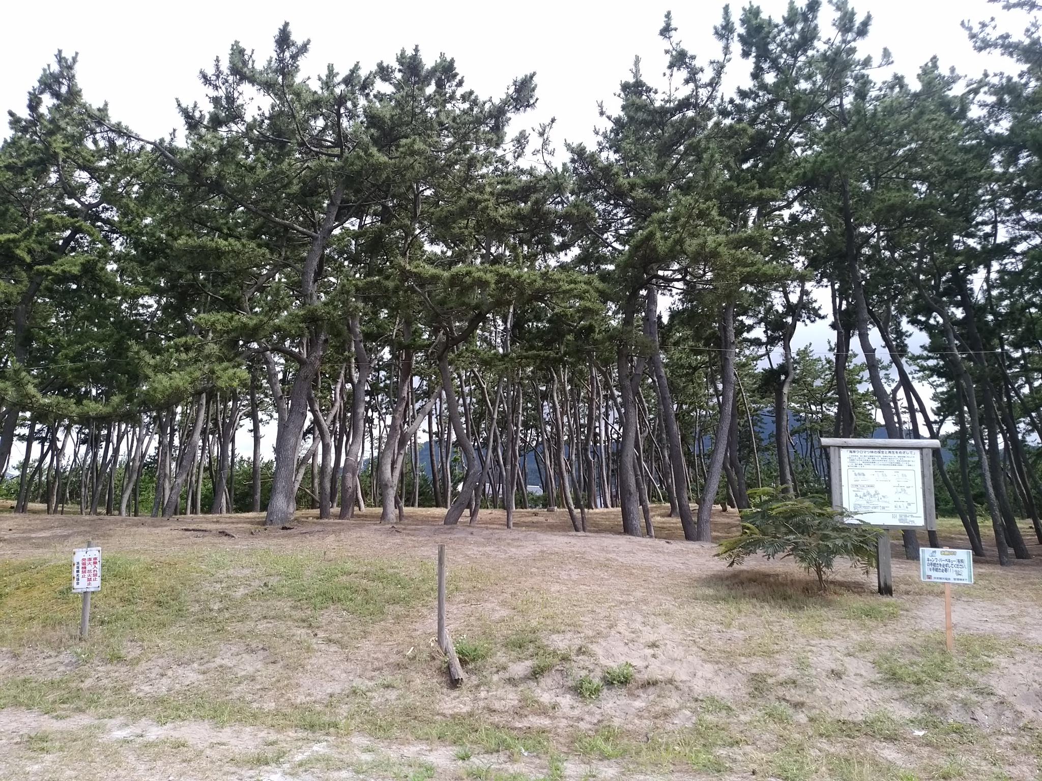 新温泉町浜坂の海岸で美しい保安...