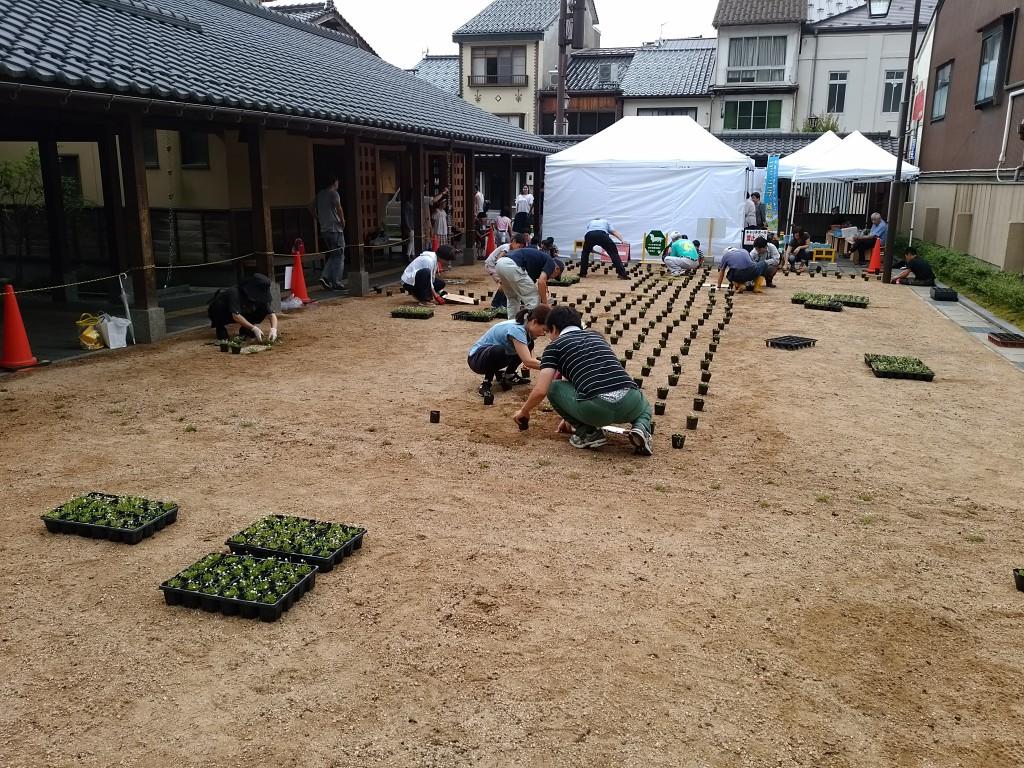 城崎温泉街でヒメイワダレソウを地域の方が植栽
